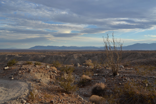 ocotillo above a wash and a long plateau before some distant mountains