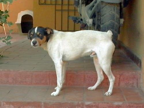 A lo perrito con la flaca chilena 2 - 4 3