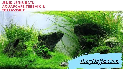 Jenis-jenis Batu Aquascape Terbaik