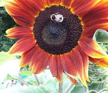 Sunflower Bumble