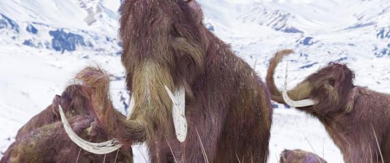 Τα μαμούθ θα επιστρέψουν σε 2 χρόνια λένε οι επιστήμονες του Xάρβαρντ