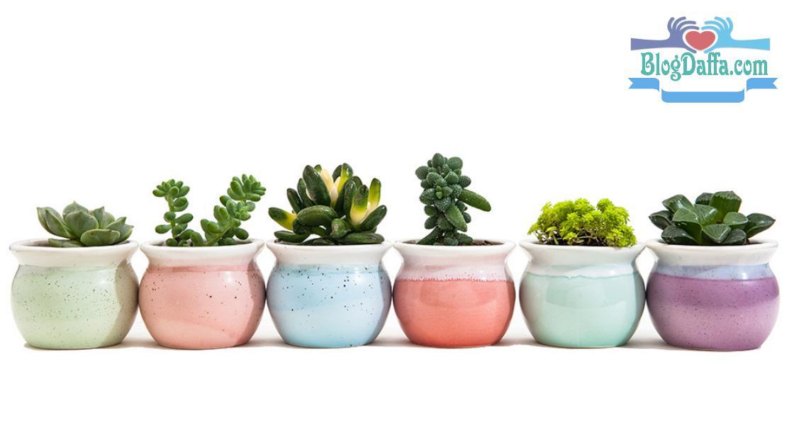 Material Ideal untuk Pot Kaktus