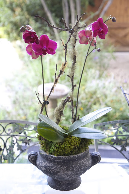 How to Design and Style an Orchid