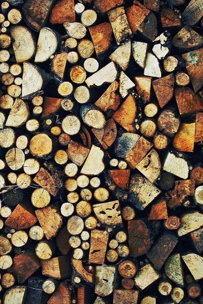 l'automne bois
