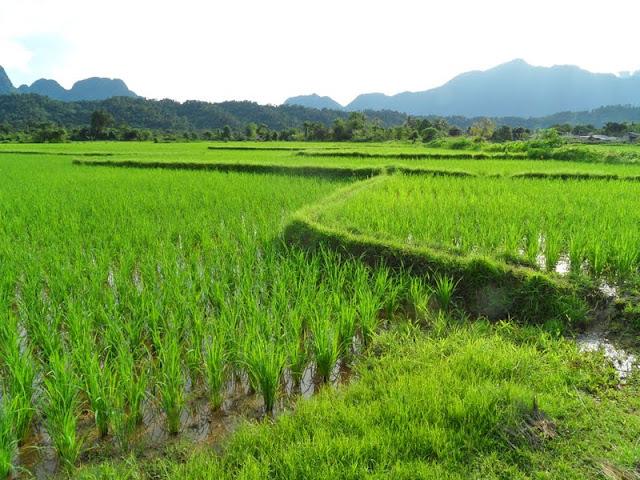Visitar VANG VIENG -Se uns fazem tubing outros desfrutam da beleza natural | Laos