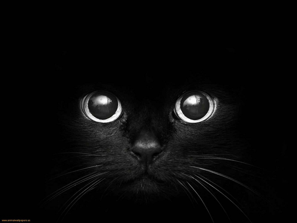 Black Cat Eyes Wallpaper: Cat Eyes Wallpapers