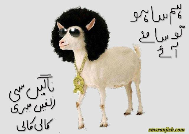 Bakra Eid Funny Images
