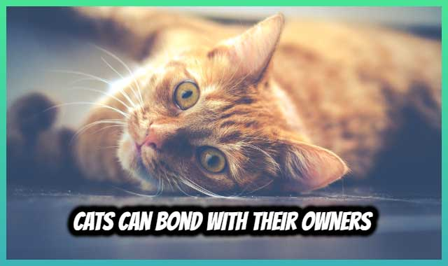 Cats Can Bond With Their Owners