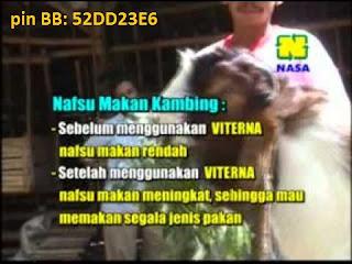 Kesaksian Prroduk Viterna Plus pada ternak kambing