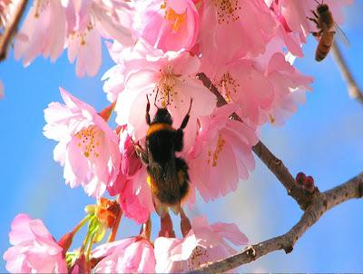 Morning Blooming Flower allfreshwallpaper