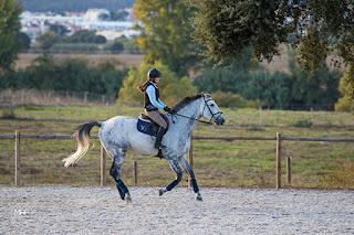 Riitta Kosonen, RIitta Reissaa, Portugali, Portugal, ratsastusloma, ratsastusblogi, KWPN, Horsexplore