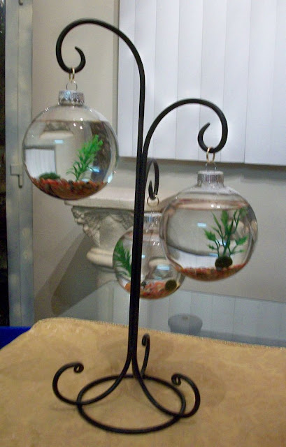 unique betta fish tank