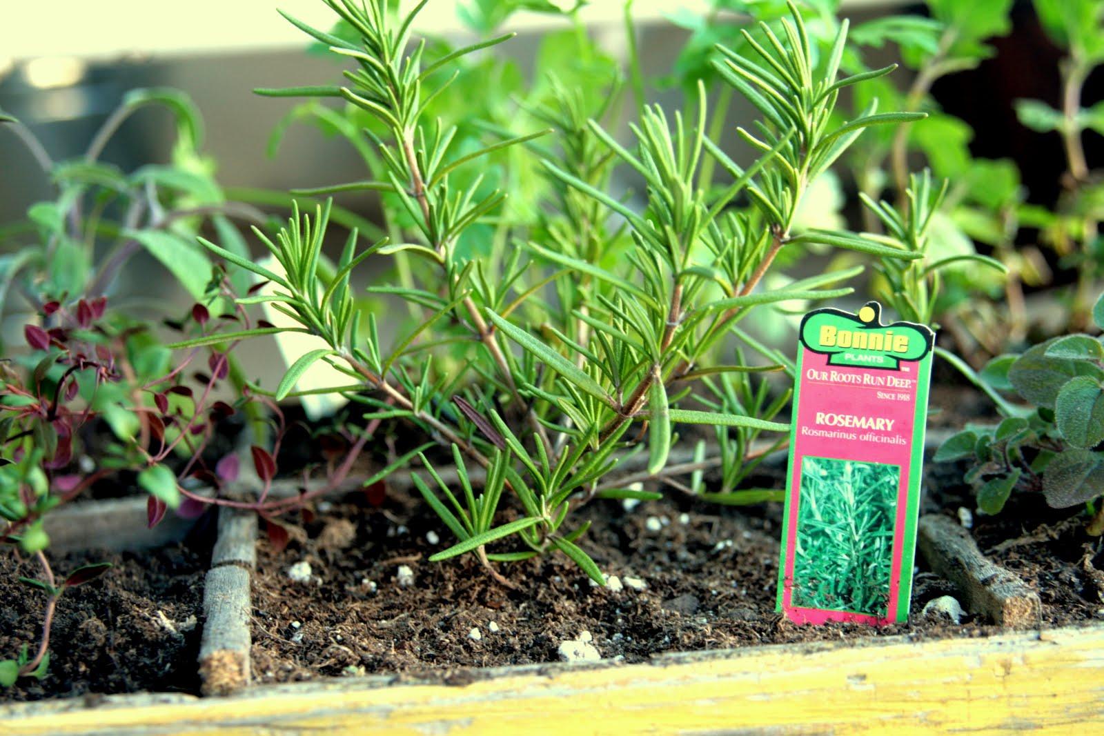 insideways: DIY Herb Garden