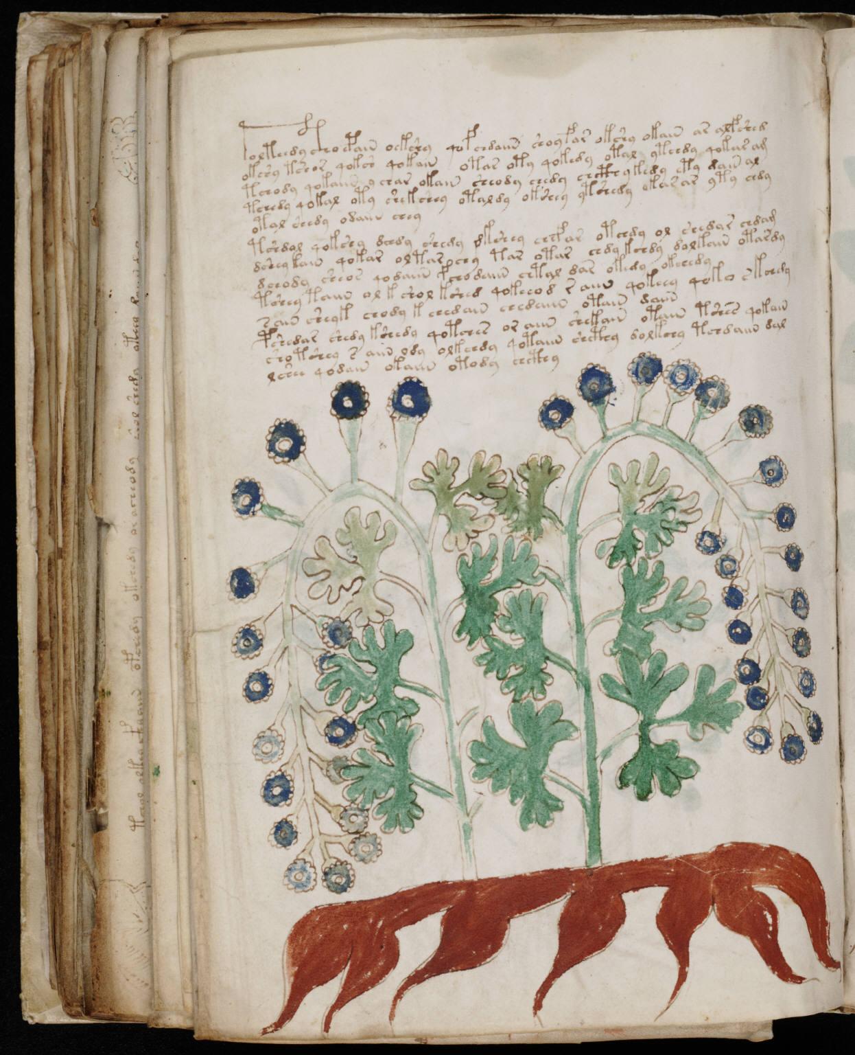 manuscrito170