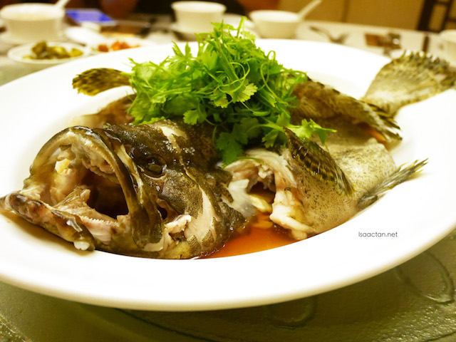 Steamed Tiger Garoupa with Bean Curd and Soy Sauce
