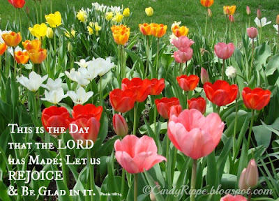 Tulips, Psalm 118:24, Office work in the Garden, This is the Day the Lord has Made, Spring Flowers, Florals-Family-Faith, Cindy Rippe