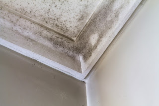 Mold in the corner of a ceiling