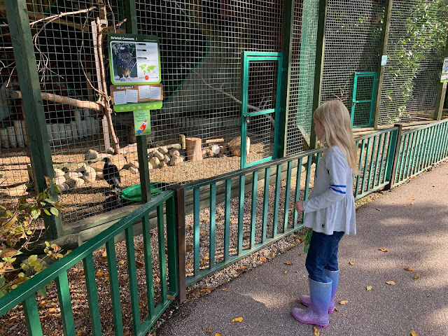 Looking in an enclosure with a large bird in