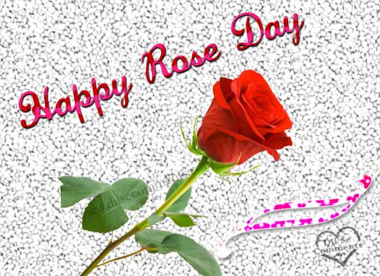 rose day28