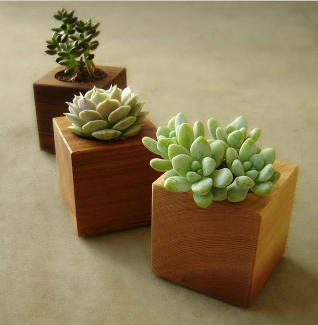 Wood Succulent Planters, Set of Three