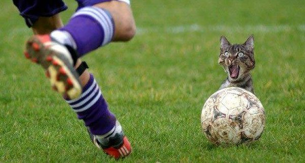 Photoshop: reemplazan balón por gatos en fotos de fútbol