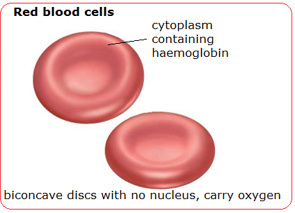 # 74 Blood cells  structure and functions | Biology Notes