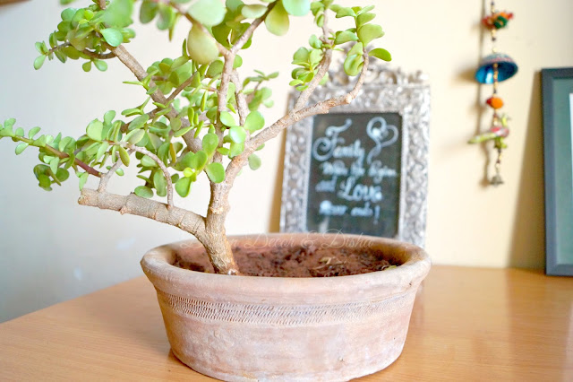 DIY Bonsai Pot