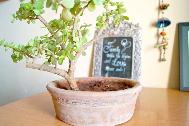 DIY Bonsai Pot