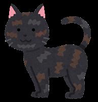 猫の模様のイラスト(サビ)