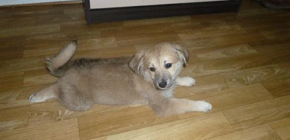 Щенок лежащий на полу