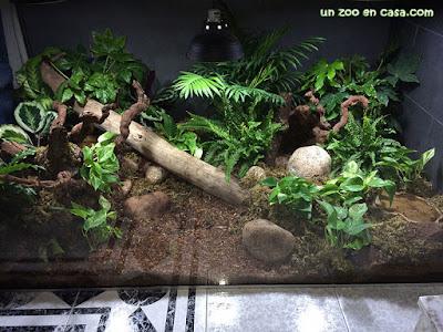 Terrario para especies forestales
