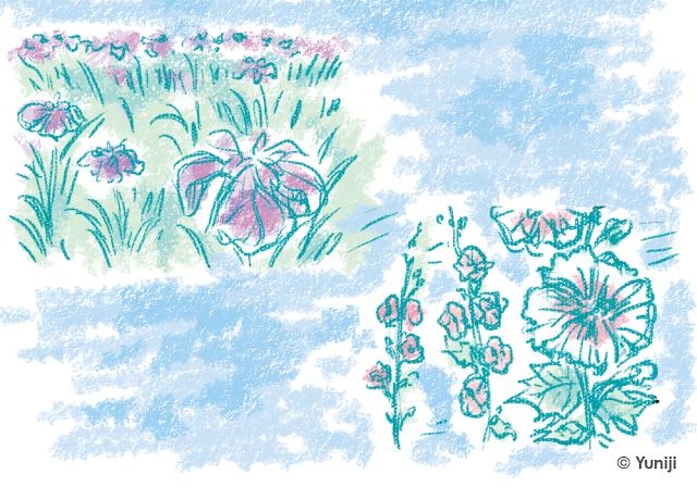 立葵と花菖蒲のスケッチ