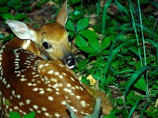 صور صور حيوانات اليفة 2019 خلفيات حيوانات جميلة 24_68192_11401641221
