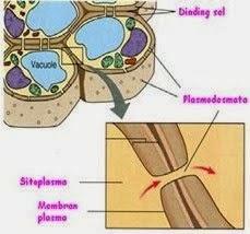 sel hewan, biologi sma