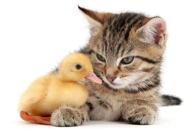 hayvan dostluğu resimleri