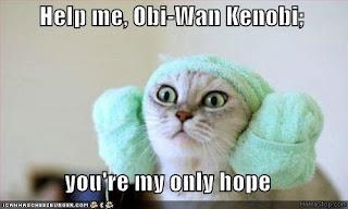 LOLcat.jpg