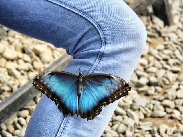 Casa fluturilor - Praid-România - blog FOTO=IDEEA