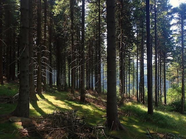 Las w okolicach Wielkiej Sowy