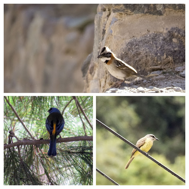 The birds of Ollantaytambo Peru