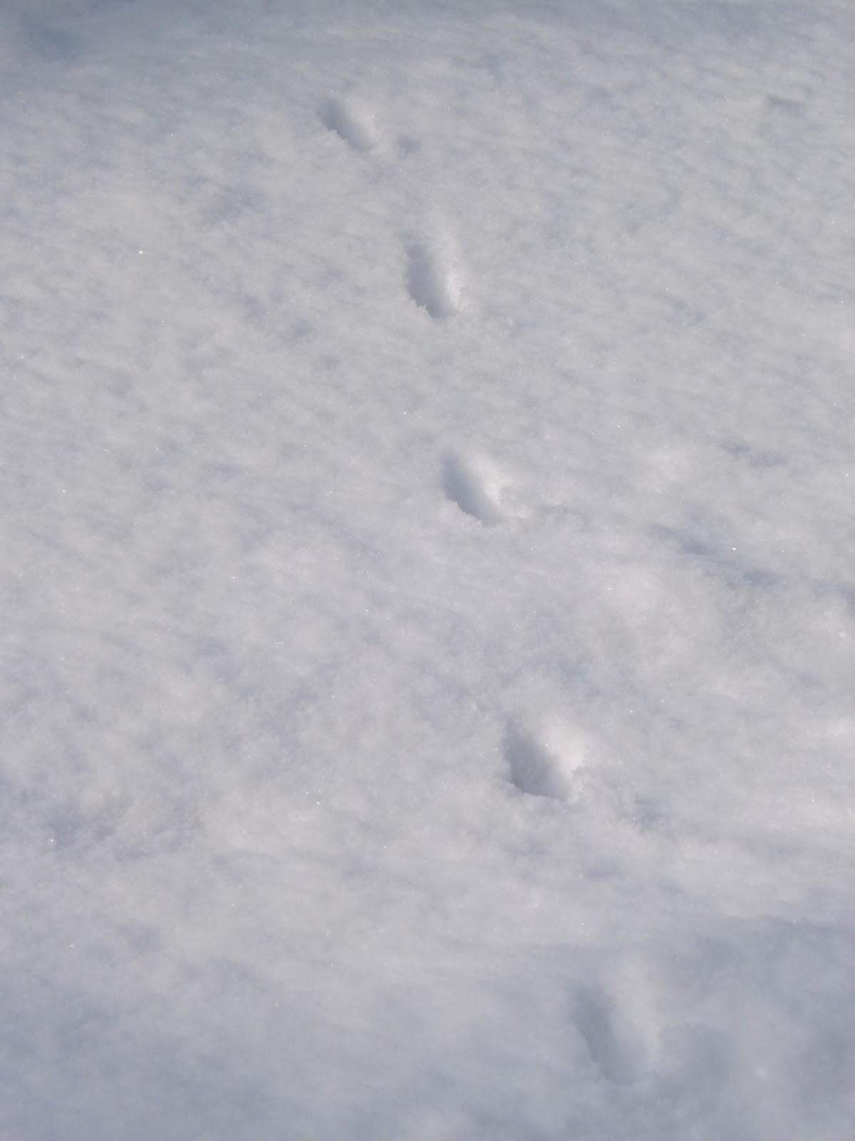 spurssen im schnee