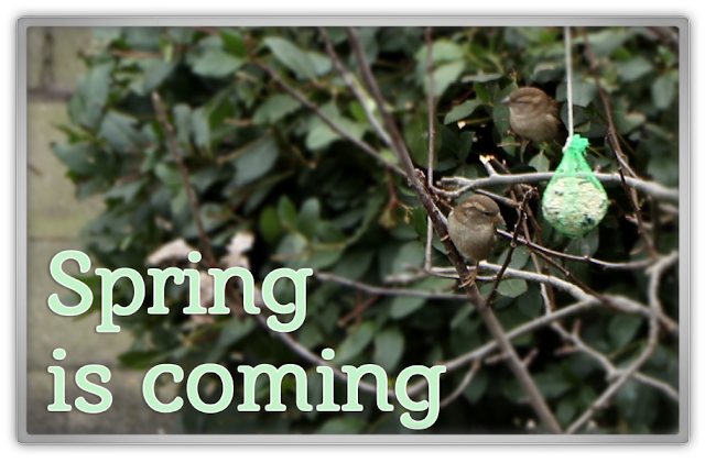 Spring is coming sparrow sparrows story personal update daily life feeling good blog k beauty blogger korean 뷰티