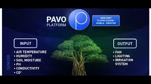 Pavo ICO Review, Blockchain, Cryptocurrency