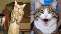 9 Foto Lucu Ekspresi Kucing Kaget yang Akan Membuatmu Ikutan Melongo