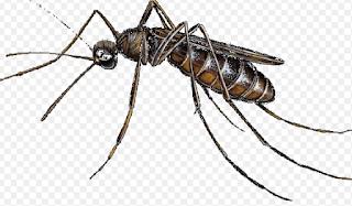 Malaria Parasite Treatment