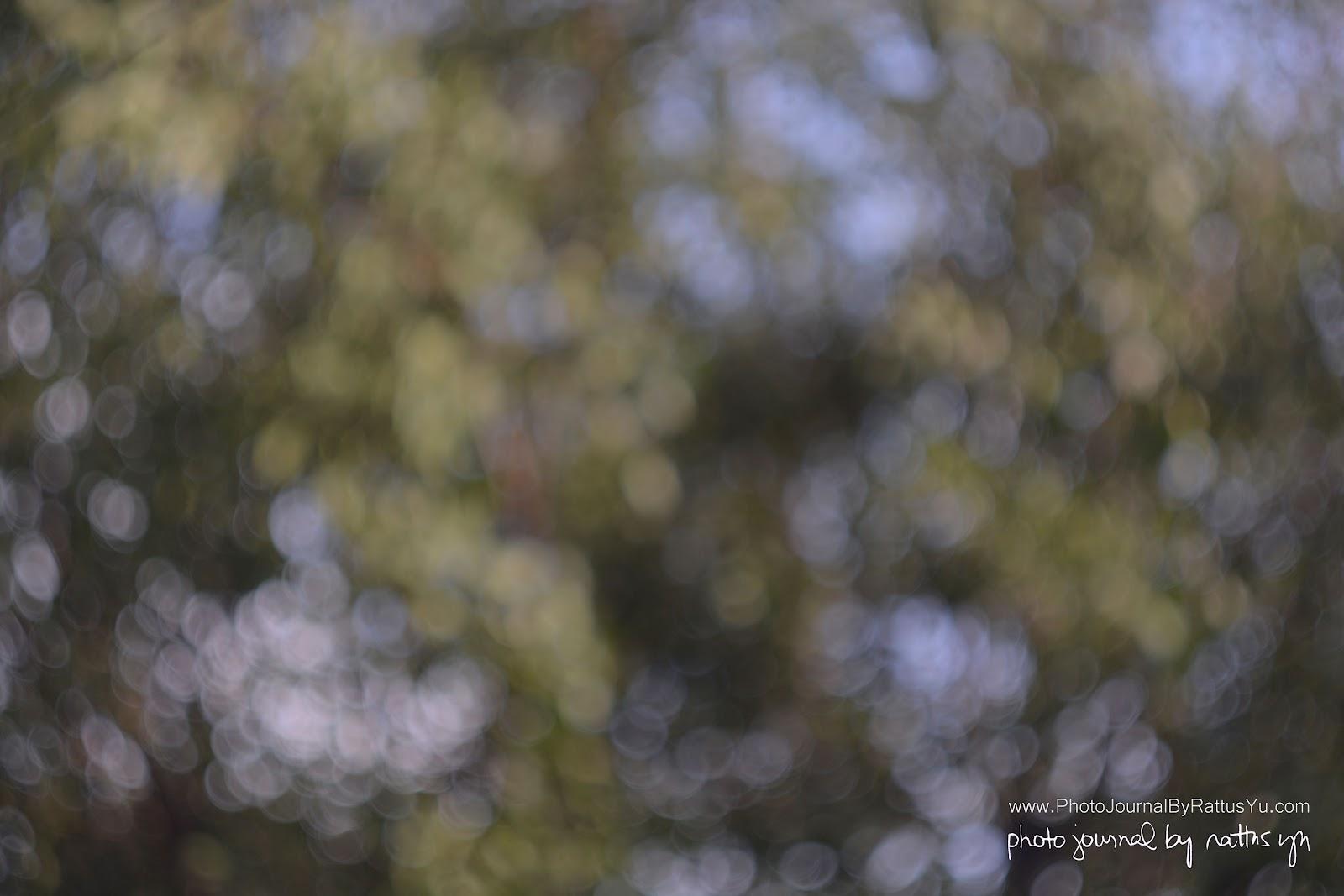 Helios 44-2 58mm f/2 (M42 Modified for Nikon Infinity)