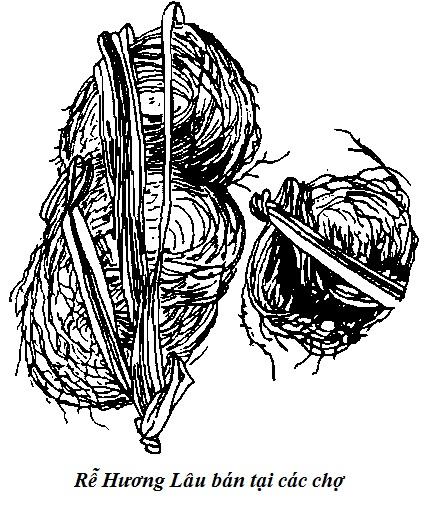 Rễ Cây Hương Lâu-Dianella Ensifolia-Nguyên liệu làm thuốc Có Chất Độc