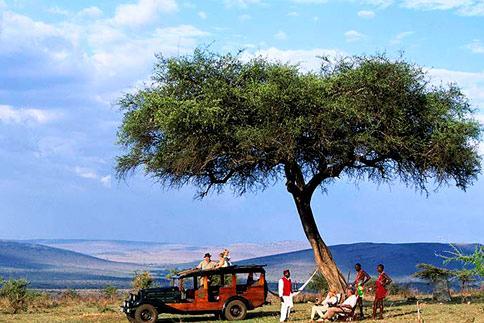 Enchant 233 E Vintage Safari True At First Light