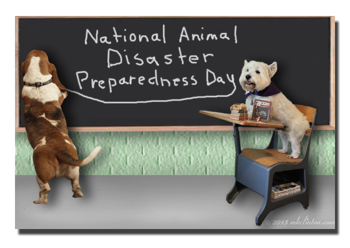 Bentley Basset Hound is teaching Pierre Westie how to prepare for a disaster