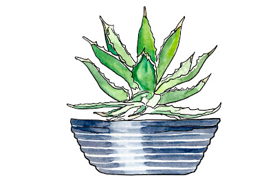 A painting of an aloe vera plant in a bowl.