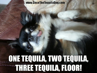 Cece The Tequila Dog I Learn The Hard Way